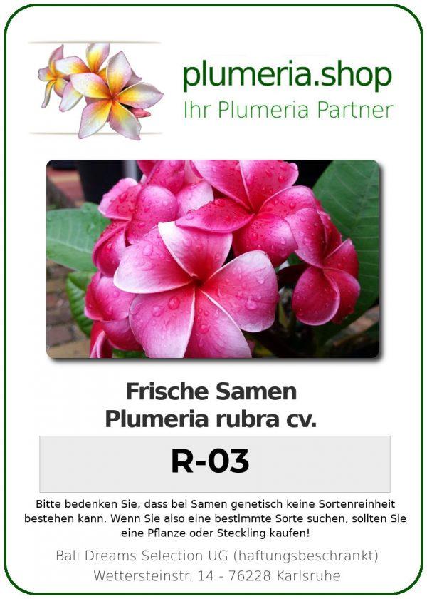 "Plumeria rubra ""R-03"""