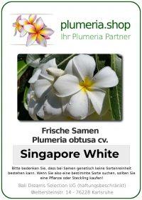 """Plumeria obtusa """"Singapore White"""""""