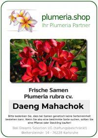 "Plumeria rubra ""Daeng Mahachok"""