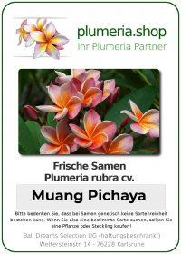 """Plumeria rubra """"Muang Pichaya"""""""