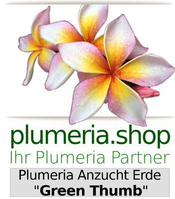 Plumeria Anzuchterde