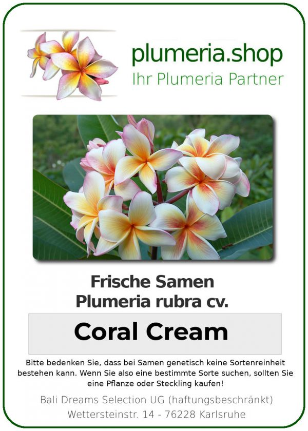 "Plumeria rubra ""Coral Cream"""