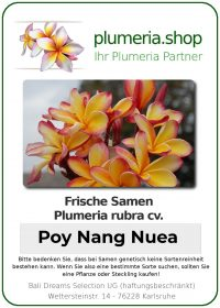 """Plumeria rubra """"Poy Nang Nuea"""""""