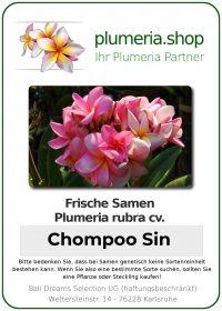"Plumeria rubra ""Chompoo Sin"""