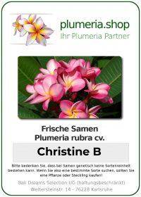 "Plumeria rubra ""Christine B"""