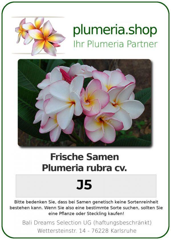 "Plumeria rubra ""J5"""