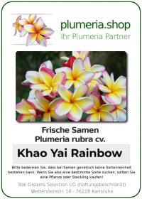 "Plumeria rubra ""Khao Yai Rainbow"""