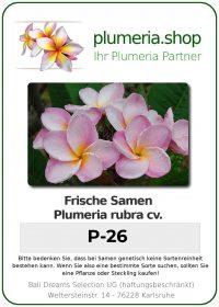 """Plumeria rubra """"P-26"""""""