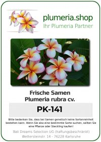 "Plumeria rubra ""PK-141"""