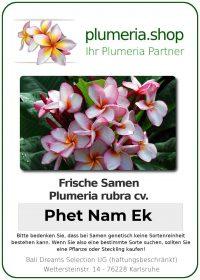 """Plumeria rubra """"Phet Nam Ek"""""""