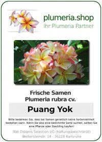 "Plumeria rubra ""Puang Yok"""