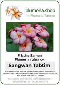 "Plumeria rubra ""Sangwan Tabtim"""