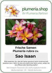 """Plumeria rubra """"Sao Isaan"""""""