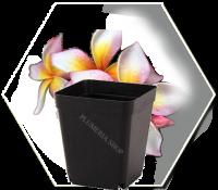 Blumentopf eckig