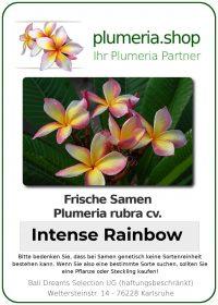 "Plumeria rubra ""Intense Rainbow"""