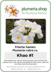 "Plumeria rubra ""Khao No. 1"""