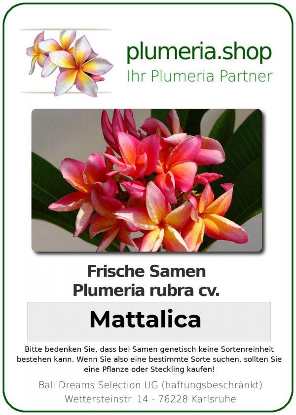"Plumeria rubra ""Mattalica"""