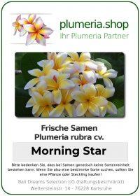 "Plumeria rubra ""Morning Star"""