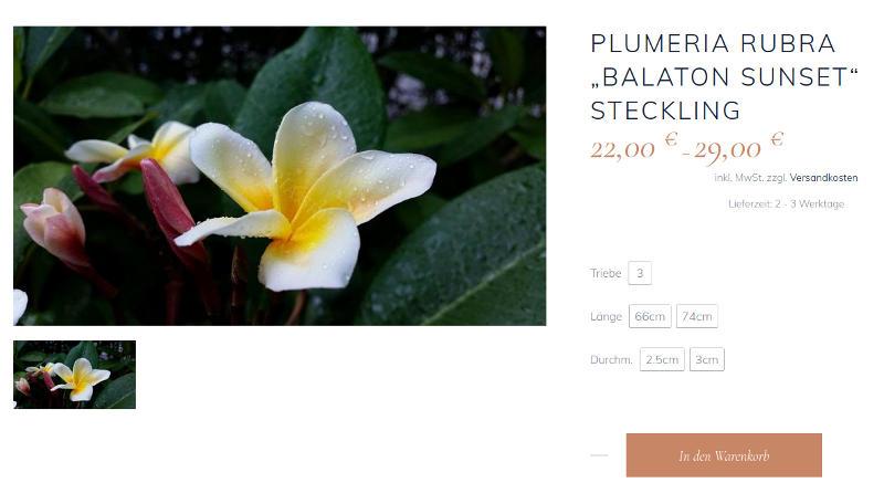 Pflanzen Historie