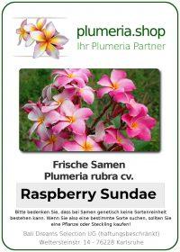 "Plumeria rubra ""Raspberry Sundae"""