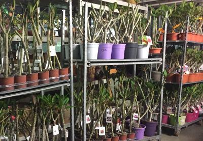Pflanzenversand