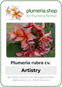 "Plumeria rubra ""Artistry"""