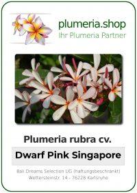 """Plumeria rubra """"Dwarf Singpore Pink"""""""