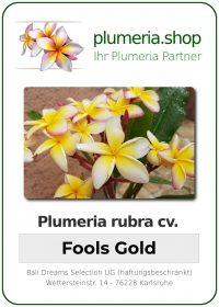 "Plumeria rubra ""Fool's Gold"""