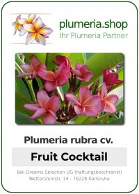 "Plumeria rubra ""Fruit Cocktail"""
