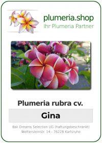 "Plumeria rubra ""Gina"""