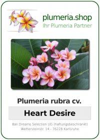 "Plumeria rubra ""Heart Desire"""