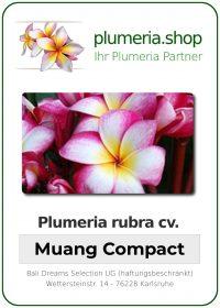 "Plumeria rubra ""Muang Compact"""