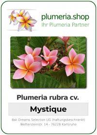 """Plumeria rubra """"Mystique"""""""