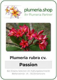 "Plumeria rubra ""Passion"""
