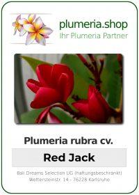"Plumeria rubra ""Red Jack"""