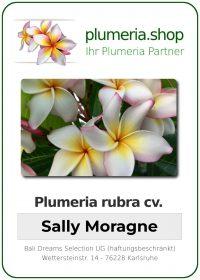 "Plumeria rubra ""Sally Moragne"""