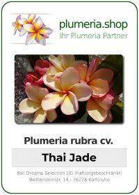 """Plumeria rubra """"Thai Jade"""""""