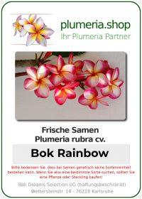 "Plumeria rubra ""Bok Rainbow"""