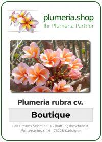 """Plumeria rubra """"Boutique"""""""