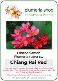 "Plumeria rubra ""Chaing Rai Red"""