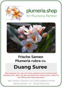 """Plumeria rubra """"Duang Suree"""""""