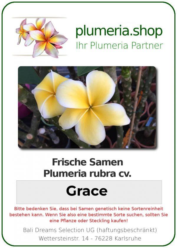 "Plumeria rubra ""Grace"""