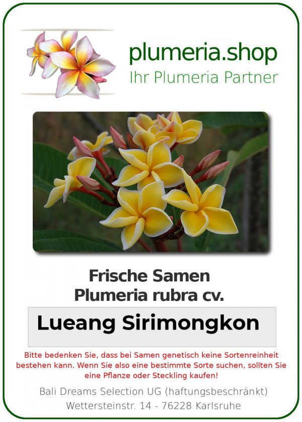 "Plumeria rubra ""Lueang Sirimongkon"""