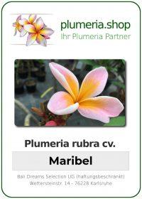 "Plumeria rubra ""Maribell"""