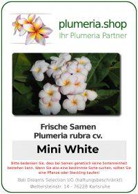 """Plumeria rubra """"Mini White"""""""