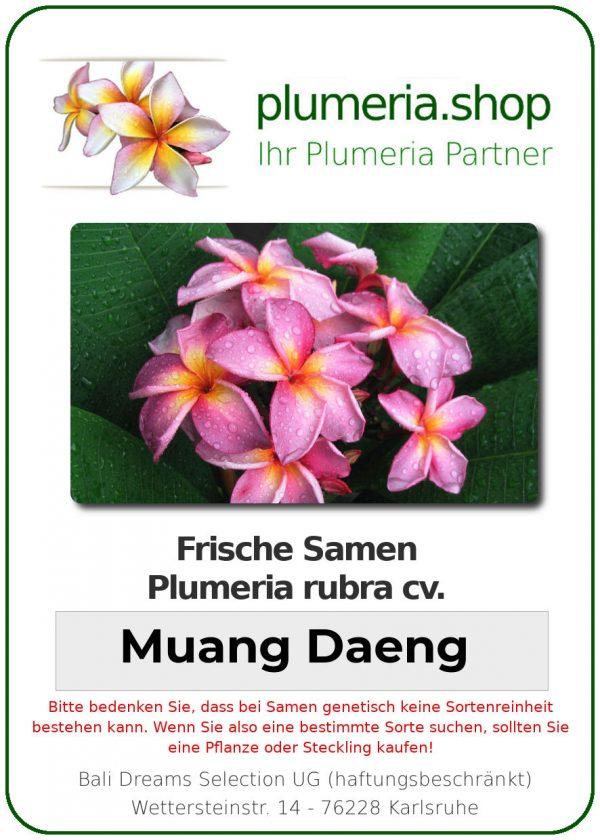 "Plumeria rubra ""Muang Daeng"""