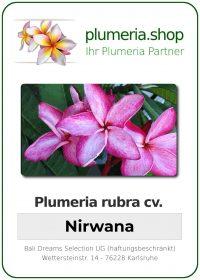 "Plumeria rubra ""Nirwana"""