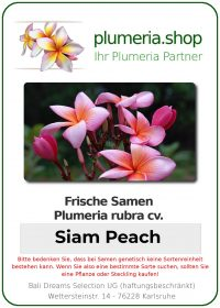 "Plumeria rubra ""Siam Peach"""