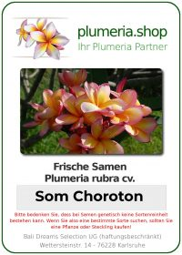 "Plumeria rubra ""Som Choroton"""