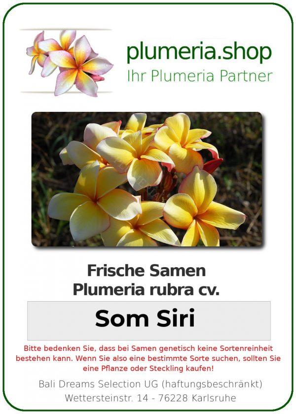 "Plumeria rubra ""Som Siri"""